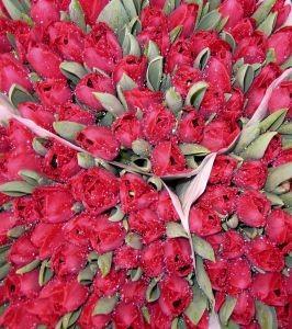 bukiety tulipanow
